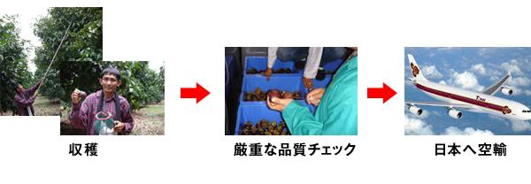 収穫→厳重な品質チェック→日本へ空輸